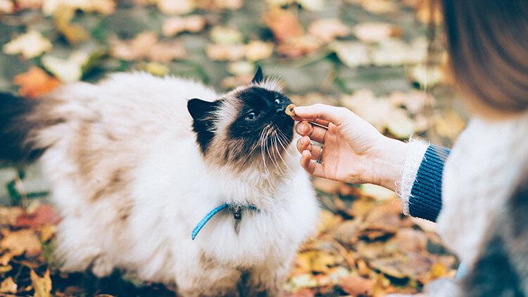 陸先輩は猫がお好き